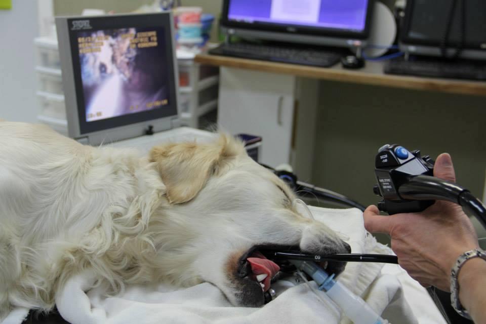 Allies in Internal Medicine Mobile Veterinary Equipment
